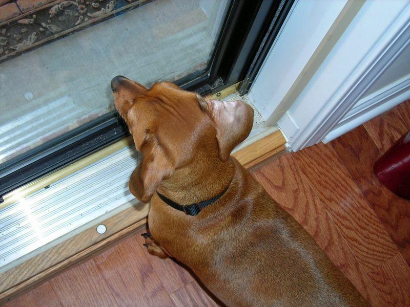 Just lookin' out da window