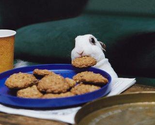 Cookierabbit