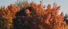 Backyard_tree