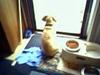 Nov_6_2005_looking_out_the_door